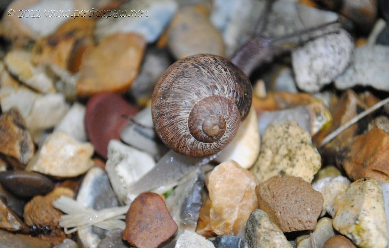 snail_0