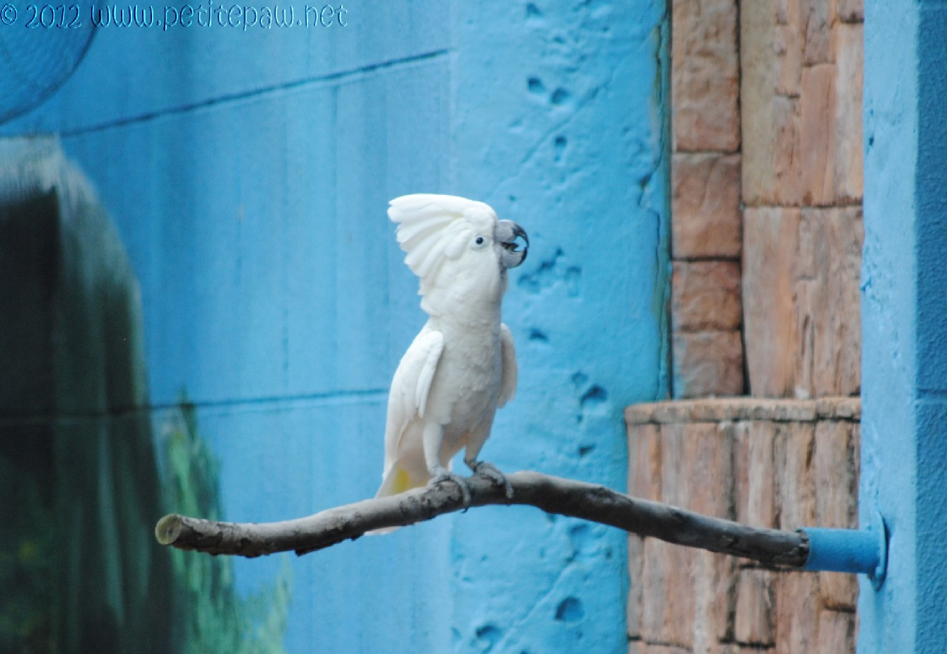 white cockatoo 1