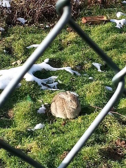 wild_rabbit_trainstation