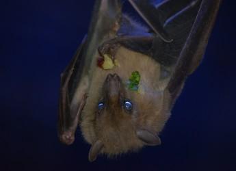 bat-418133_1280