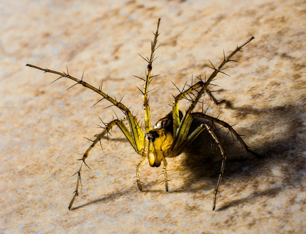 small-spider-313118_1920