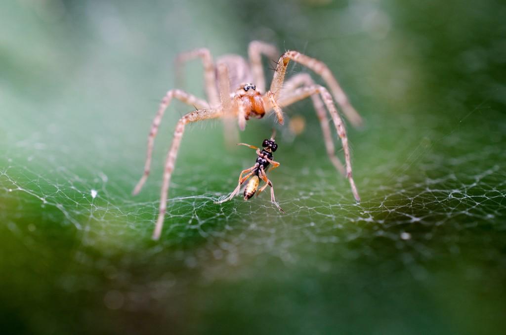 spider-197059_1920