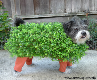 http://www.cutestdogever.com/dog_costumes.html