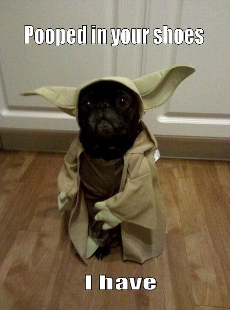 funny-cute-Yoda-dog-Halloween-costume