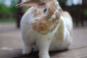 summer scratch ears