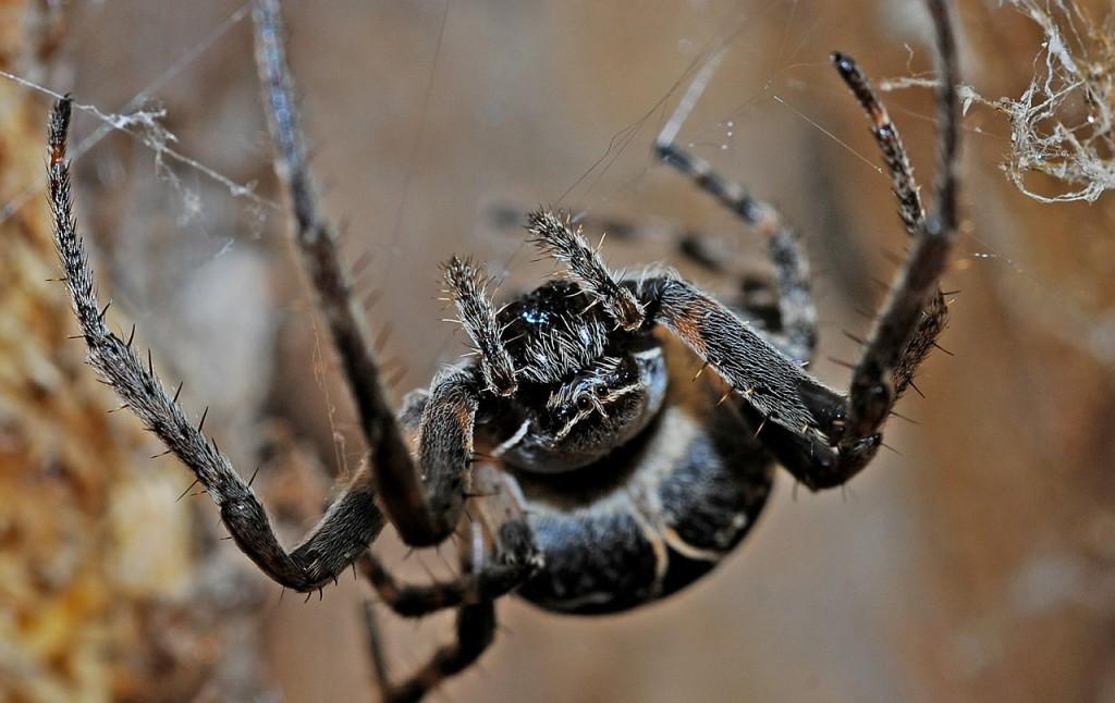 spider-564635_1280