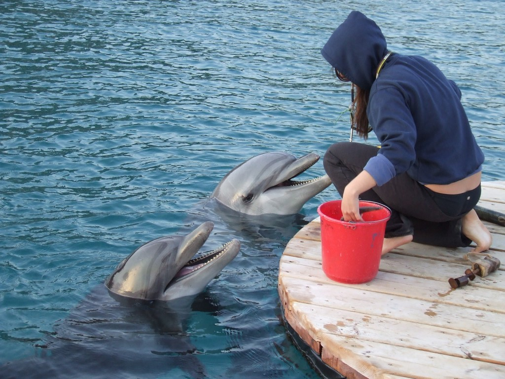 Dolphins eating their snacks